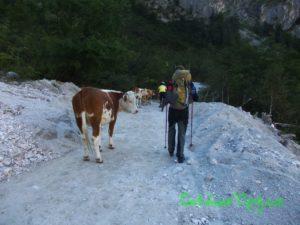 I takhle vypadá turistika v Alpách