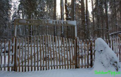 Žofínský prales v zimě