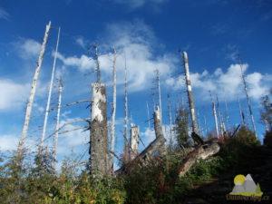 Následky ničivé vichřice, která zničila velkou část tatranských lesů.