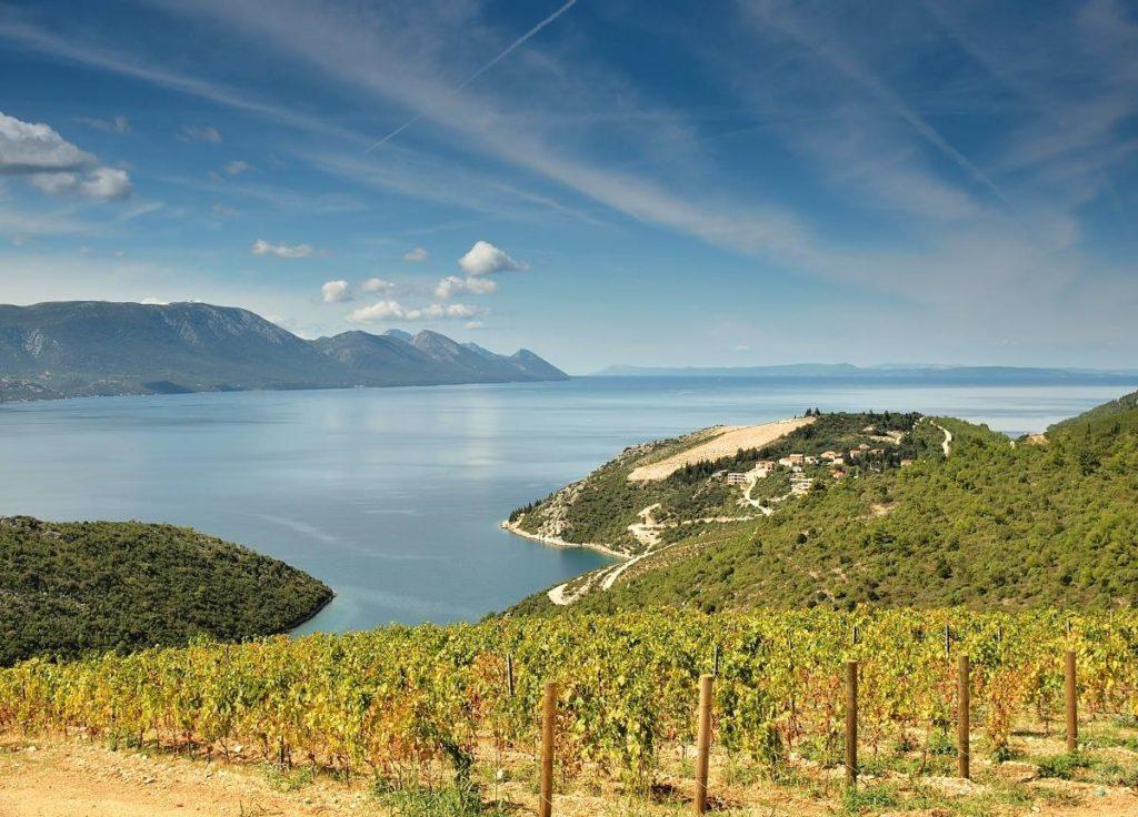 Vinice v Chorvatsku