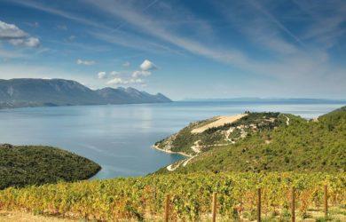 Chorvatsko vinice