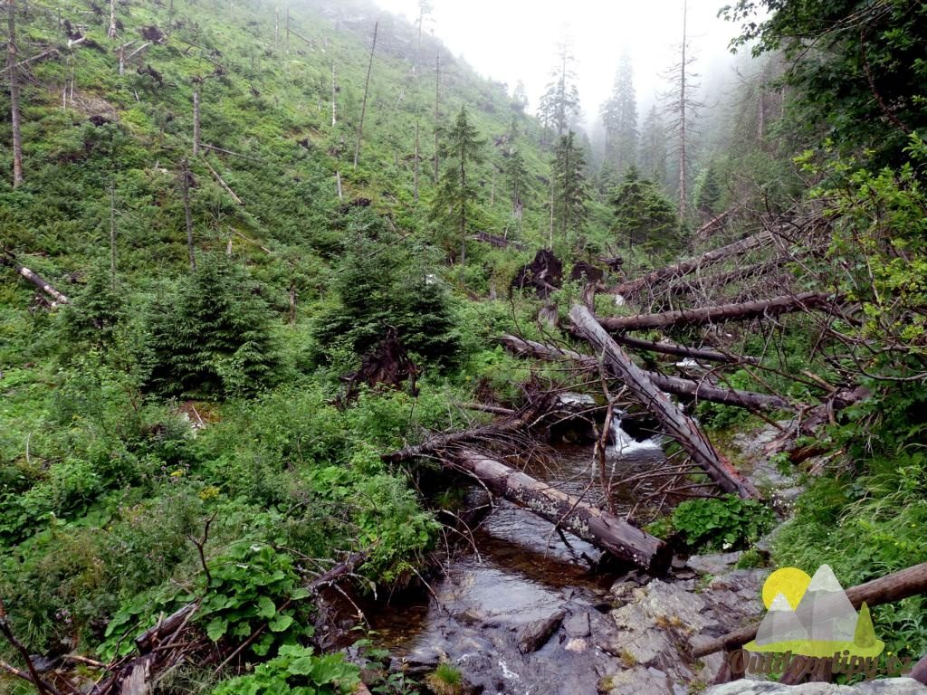 samovolný vývoj přírody v oblasti Bílé Opavy