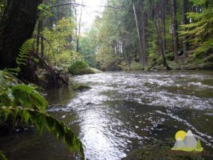 Hamerský potok pod Ratmírovským rybníkem
