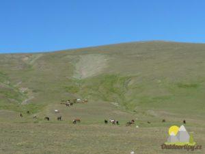 volně pasoucí se koně v pohoří Rila