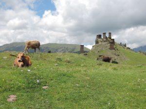 Krávy s hradem Keselo v pozadí